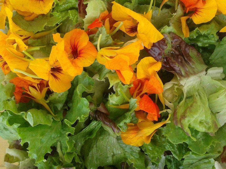 Salat Kapuzinerkresseklein